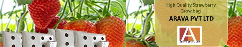 Arava Exports