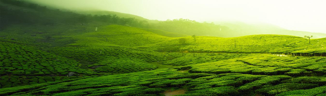 tea-exporters-sri-lanka-2